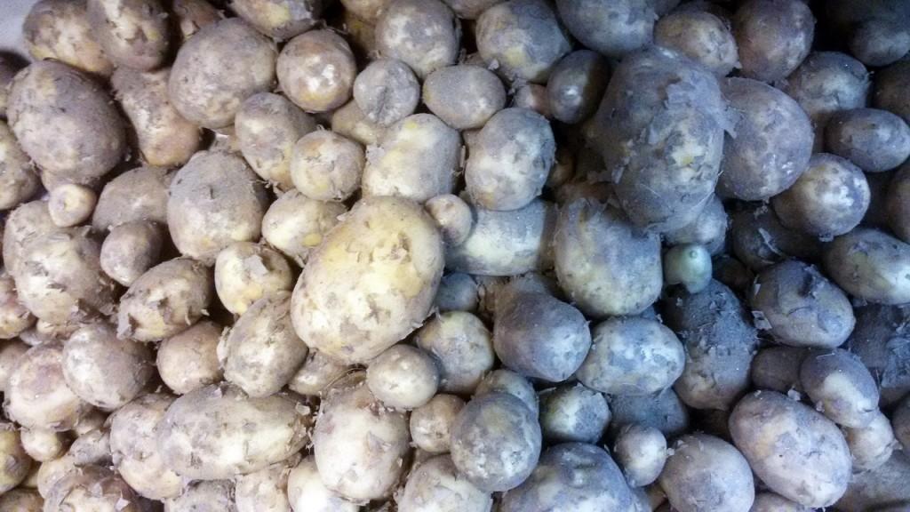 Mladi krompir 1kg