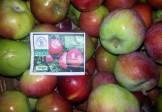 Organska jabuka Enterprise 1kg