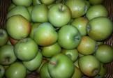 Organska jabuka Gold Rush 1kg
